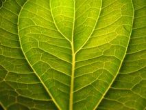Detalhe da folha com sombras Imagem de Stock