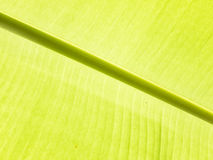 Detalhe da folha da banana Imagens de Stock