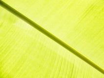 Detalhe da folha da banana Fotos de Stock Royalty Free