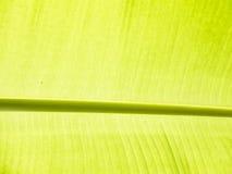 Detalhe da folha da banana Fotos de Stock
