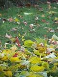 Detalhe da folha da queda no outono fotografia de stock