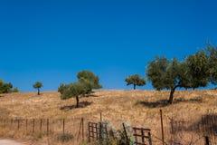 Detalhe da ilha de Evia Imagem de Stock