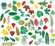 Detalhe da natureza da cor Imagem de Stock Royalty Free