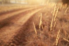 detalhe da natureza do outono Foto de Stock