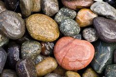 Detalhe da praia rochosa Fotografia de Stock Royalty Free