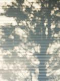 Detalhe da sombra da árvore no backgroun do sumário da natureza da parede do metal branco Imagem de Stock