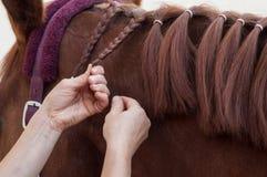 Detalhe da trança da mulher com os cabelos da juba do ho fotos de stock royalty free