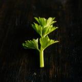 Detalhe de único ramo da erva verde fresca na madeira escura Foto de Stock Royalty Free