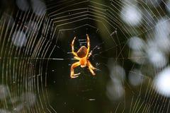 Detalhe de aranha de jardim com uma cruz Foto de Stock Royalty Free