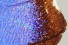 Detalhe de asa da borboleta imagem de stock