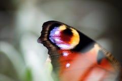Detalhe de asa da borboleta de pavão closeup Imagens de Stock Royalty Free