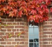 Detalhe de Autumn Ivy na parede de tijolo vermelho Imagens de Stock