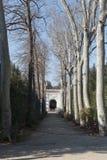 Detalhe de avenida das árvores no parque imagem de stock royalty free