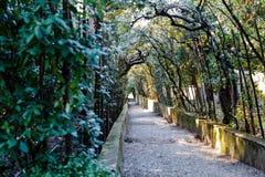 Detalhe de avenida das árvores no parque fotos de stock