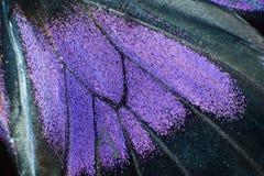 Detalhe de borboleta imagens de stock