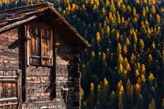 Detalhe de celeiro de madeira tradicional com uma vista cênico do pinheiro em mudança no outono perto de Matterhorn, Suíça foto de stock royalty free
