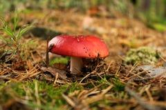 Detalhe de cogumelo em uma floresta Imagem de Stock Royalty Free