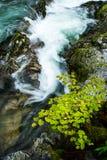 Detalhe de desfiladeiro de Vintgar Fotografia de Stock