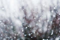 Detalhe de flocos de neve macia de queda. imagens de stock royalty free