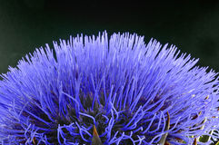 Detalhe de flor fotografia de stock royalty free