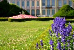 Detalhe de flor em um parque de Oliwa em Gdansk - Danzig Foto de Stock