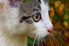 Detalhe de gatinho Fotografia de Stock Royalty Free