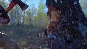 Detalhe de jaque da madeira serrada que desbasta a lenha com um machado pelo tempo do inverno Feche acima da madeira das separaçõ video estoque