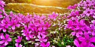Detalhe de jardim de rocha Imagens de Stock Royalty Free
