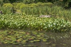 Detalhe de lagoa japonesa do jardim Fotos de Stock Royalty Free