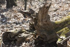 Detalhe de madeira da deterioração Fotos de Stock Royalty Free