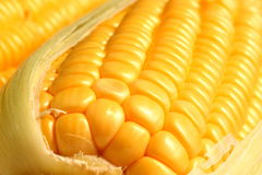Detalhe de milho Fotografia de Stock