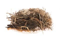 Detalhe de ovos do pássaro no ninho Fotos de Stock Royalty Free