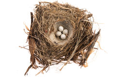 Detalhe de ovos do pássaro no ninho Imagens de Stock Royalty Free