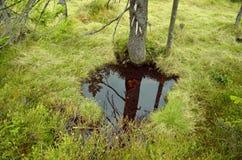 Detalhe de pântano de turfa Foto de Stock