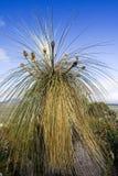 Detalhe de palma no Knoll do blefe Imagens de Stock