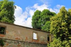 Detalhe de parede velha cercado por árvores fotografia de stock royalty free