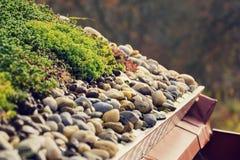Detalhe de pedras na vegetação viva verde extensiva do telhado coberta imagens de stock