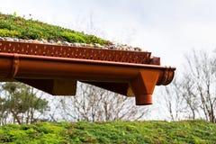 Detalhe de pedras na vegetação viva verde extensiva do telhado coberta fotos de stock royalty free