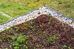Detalhe de pedras na vegetação viva verde extensiva do telhado coberta fotografia de stock royalty free