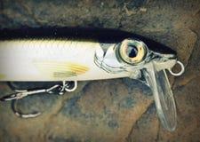 Detalhe de peixinho de rio de pesca de superfície de flutuação da tomada da atração foto de stock royalty free