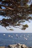 Detalhe de pinheiro e de barcos no mar Foto de Stock Royalty Free