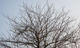 Detalhe de ramos de árvore marrons Imagens de Stock Royalty Free
