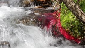 Detalhe de rio da montanha com plantas vermelhas e água movente 03 vídeos de arquivo