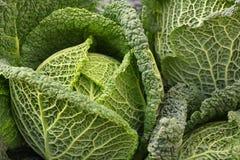 Detalhe de sauerkraut Foto de Stock Royalty Free