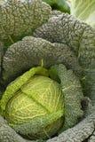 Detalhe de sauerkraut Fotografia de Stock Royalty Free