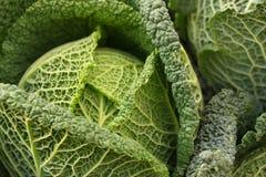 Detalhe de sauerkraut Imagem de Stock