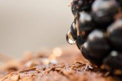 Detalhe de sobremesa das panquecas com framboesas e gota do mel Foto de Stock Royalty Free