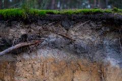 Detalhe de solo de podzol imagem de stock