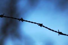Detalhe de um arame farpado dos espinhos Fotos de Stock