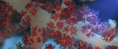 Detalhe de um coral macio Imagem de Stock Royalty Free